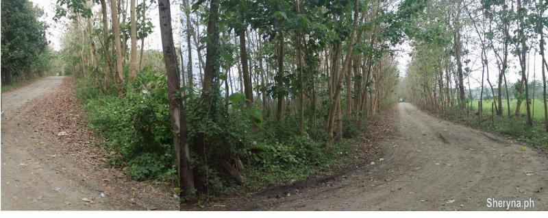 Picture of 2. 6hec FARM residential near GREEN CITY, Capas, Tarlac